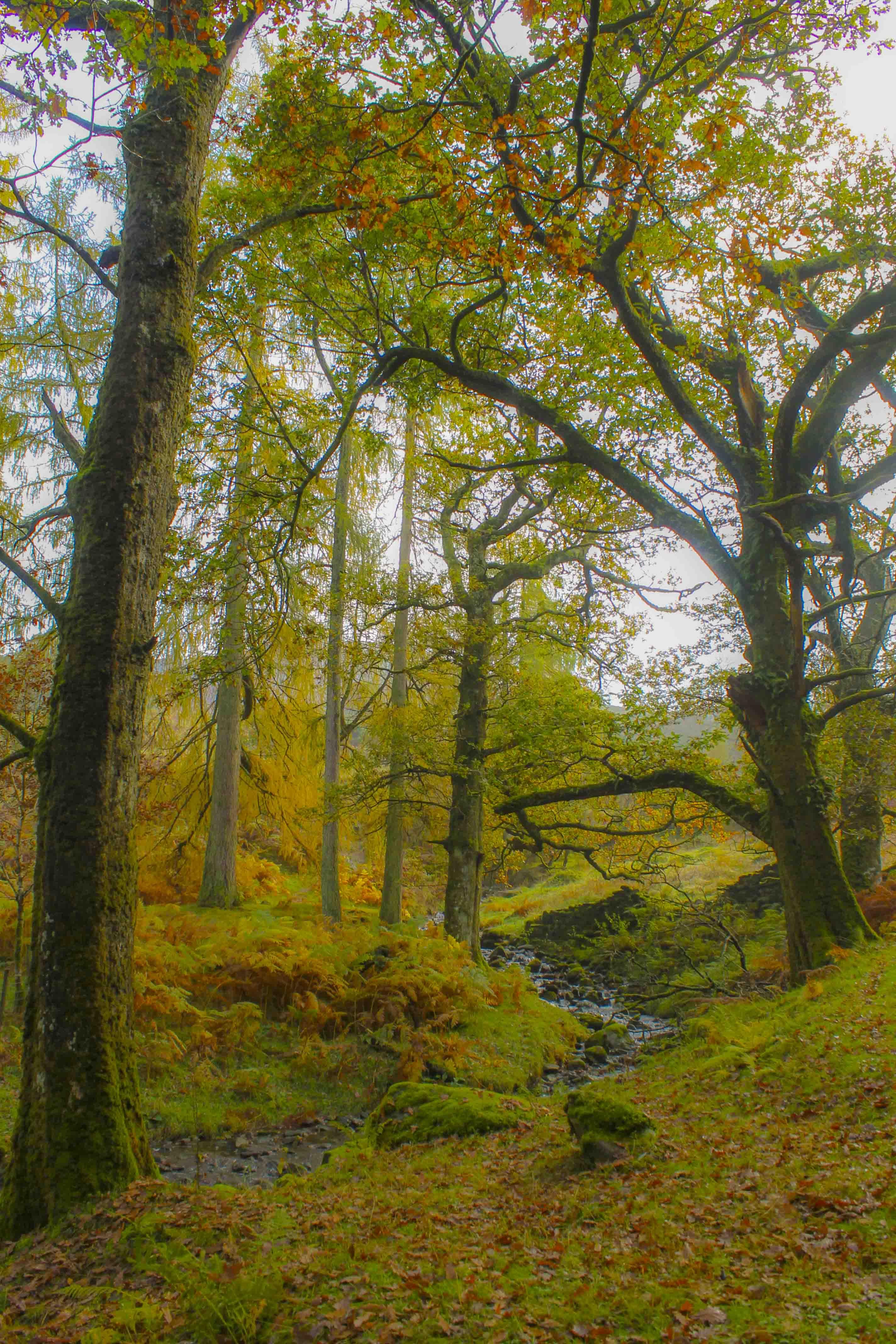 Herfst in Engeland