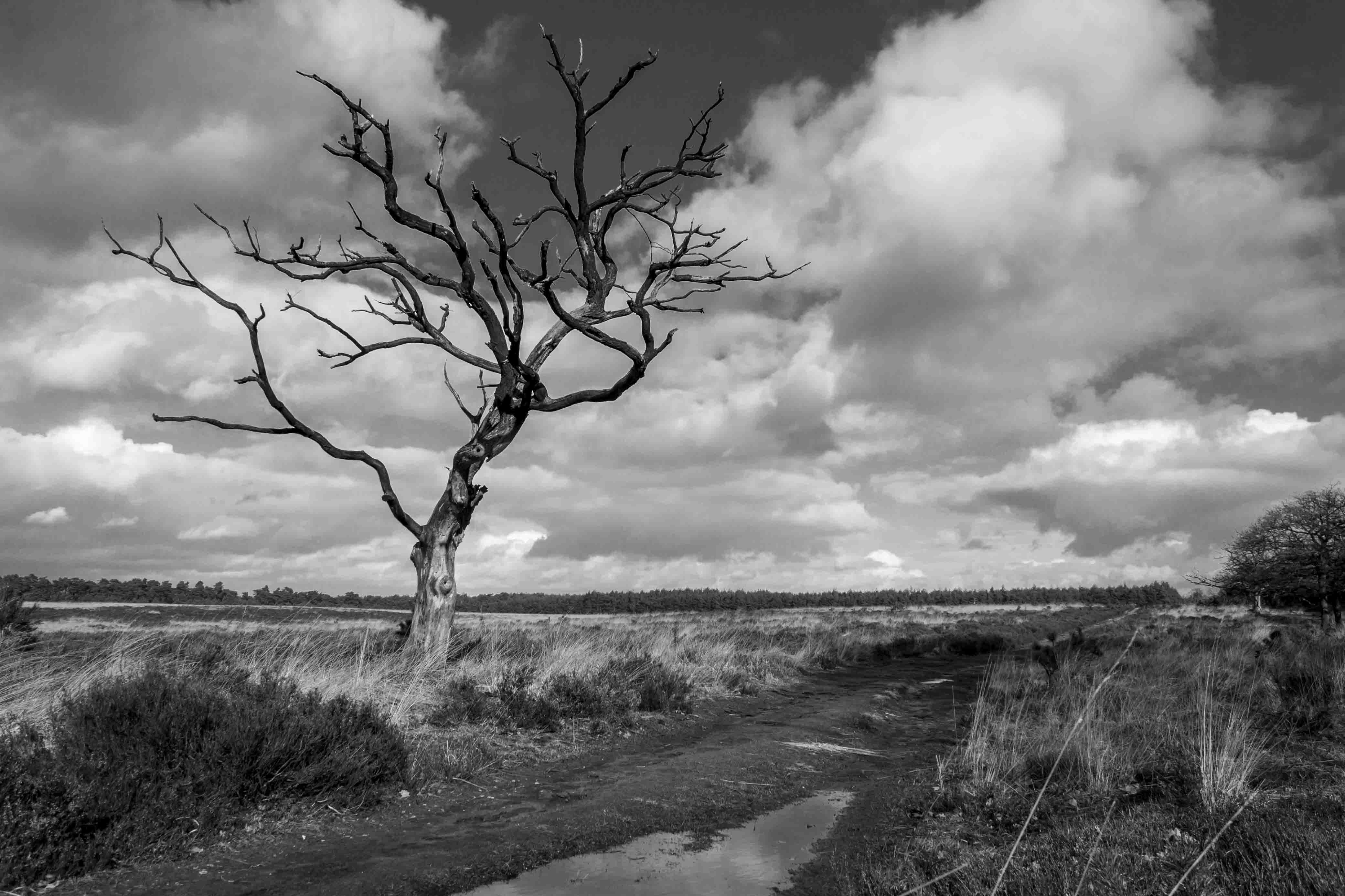 Landschap met gevoel voor dramatiek in het Deelerwoud
