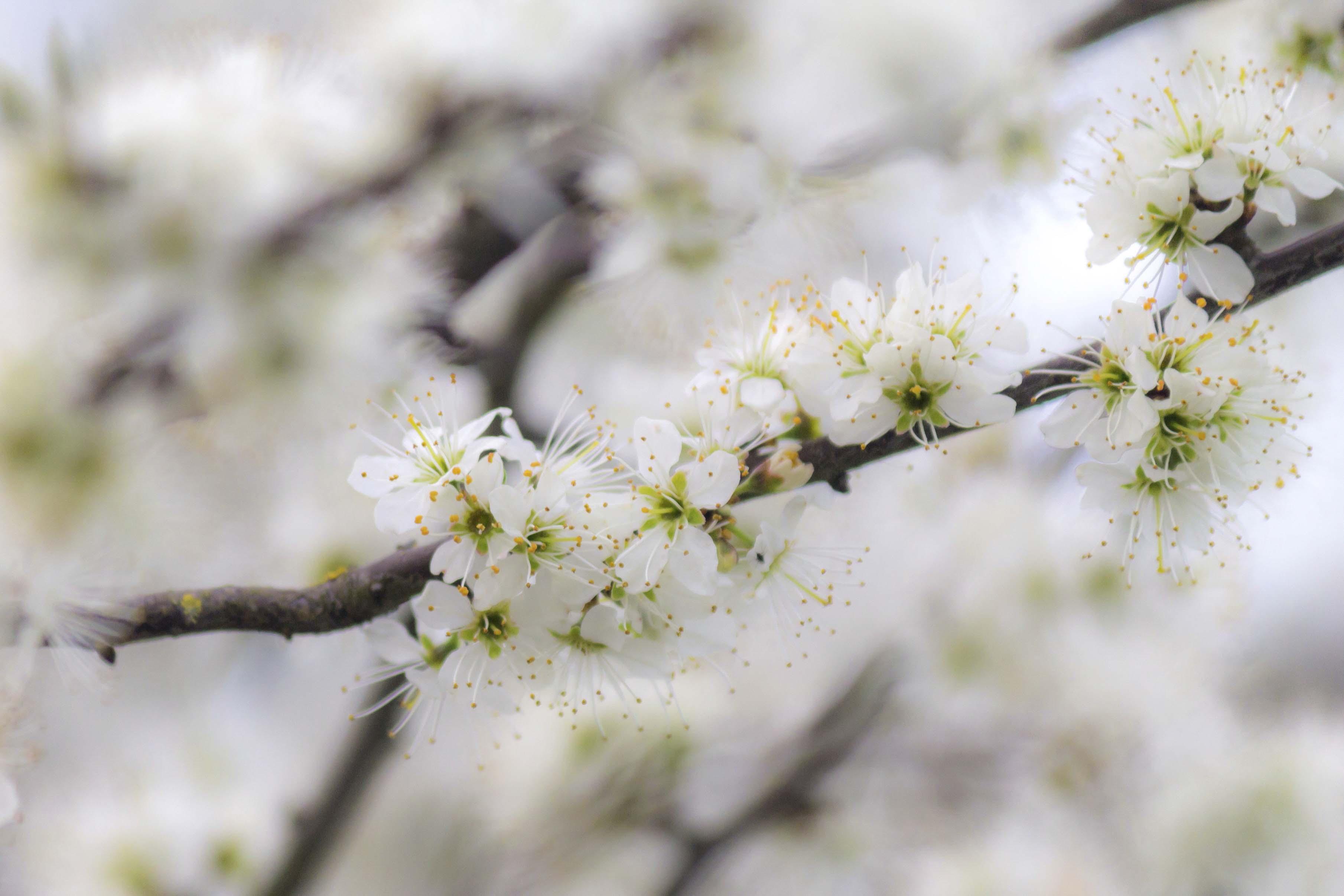 Het begin van de lente