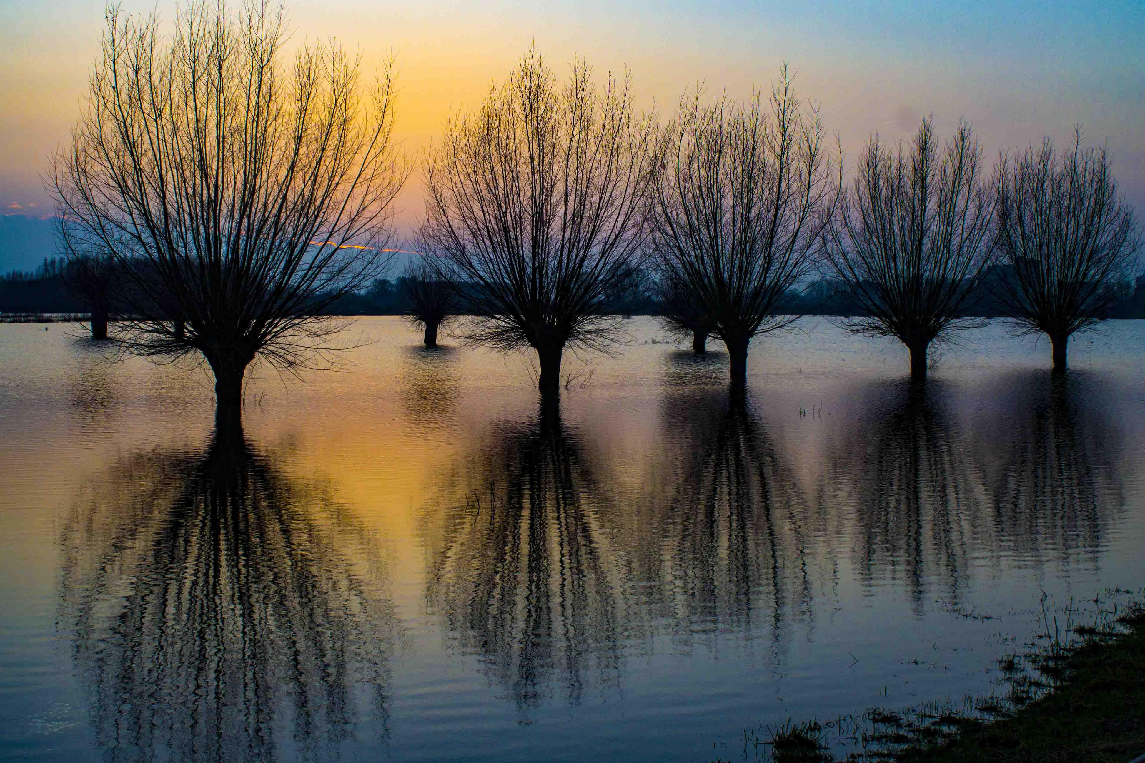 Hoogwater in de Wageningse Uiterwaarden