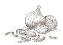 Onions drawing