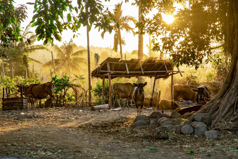 Het landleven op Lombok