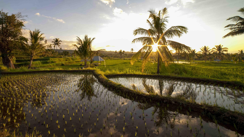 Indonesische rijstvelden op Lombok