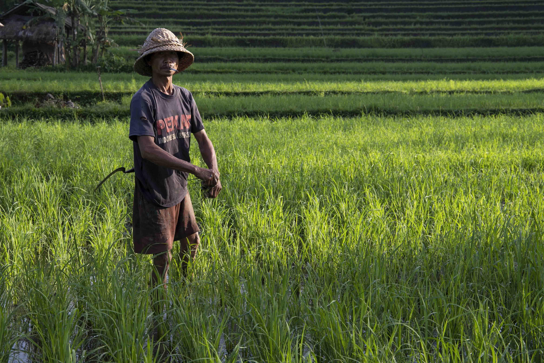 Tussen de rijstvelden in het oosten van Bali
