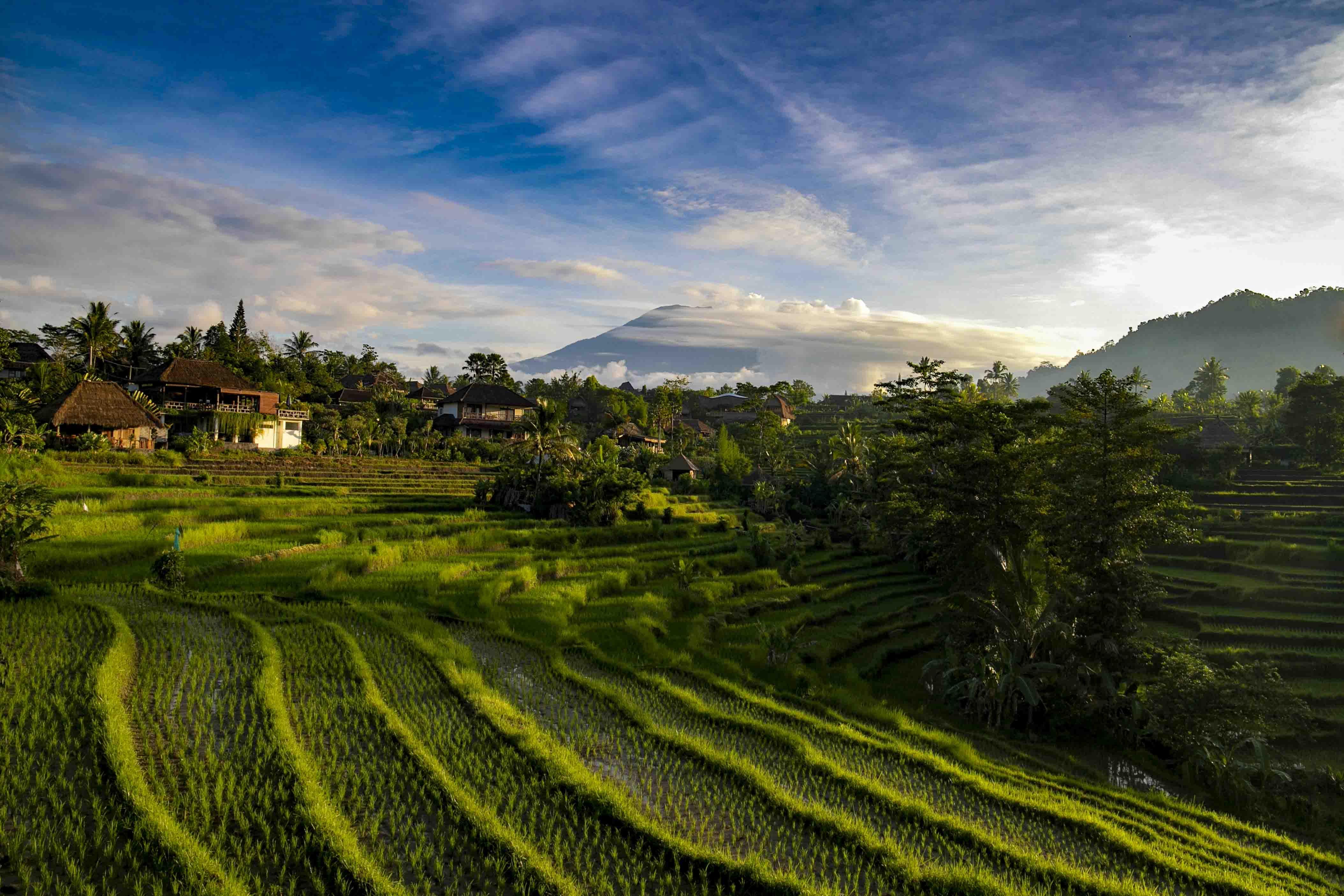 Rijstterassen buiten Sidemen