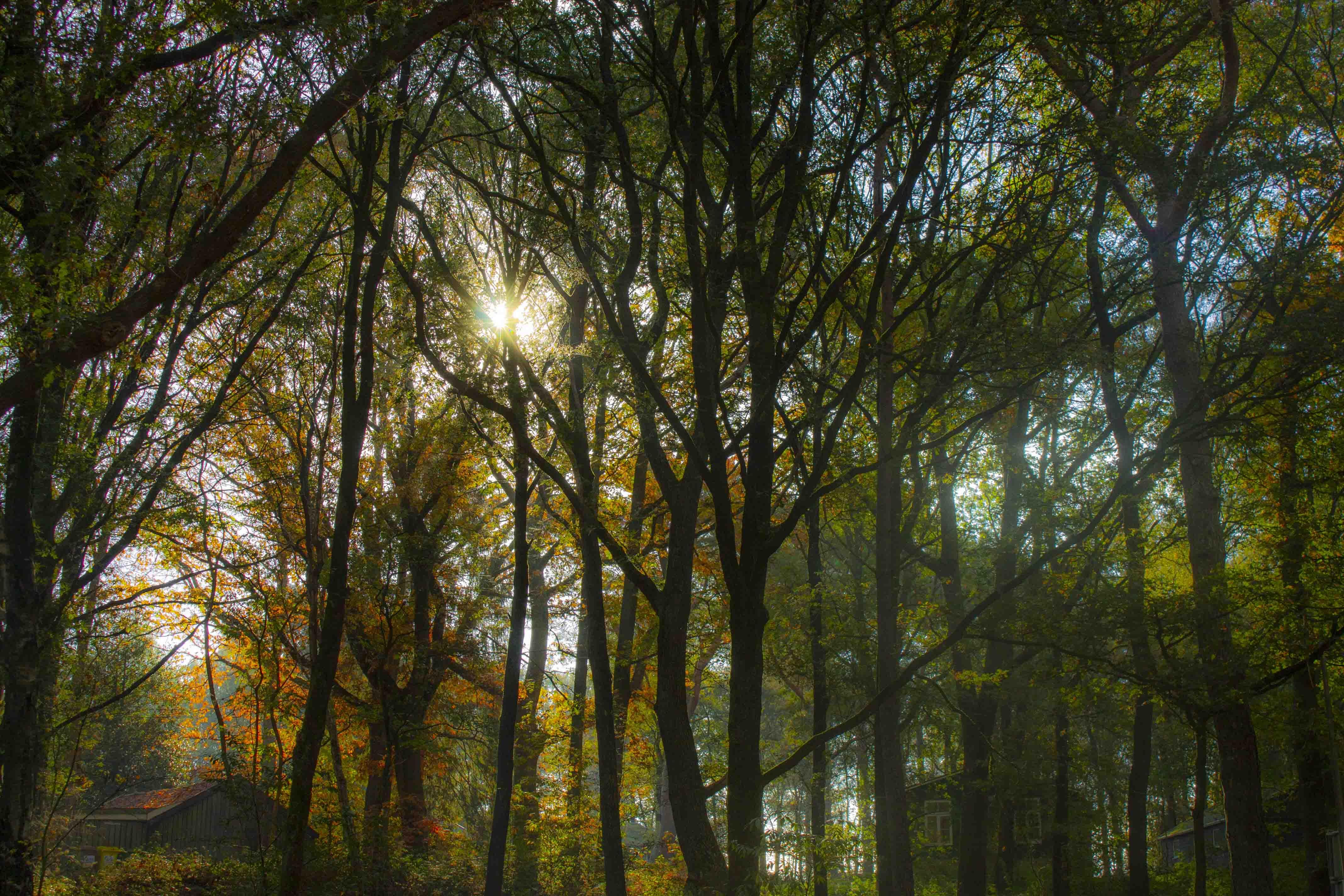 Herfst in het Drentse bos