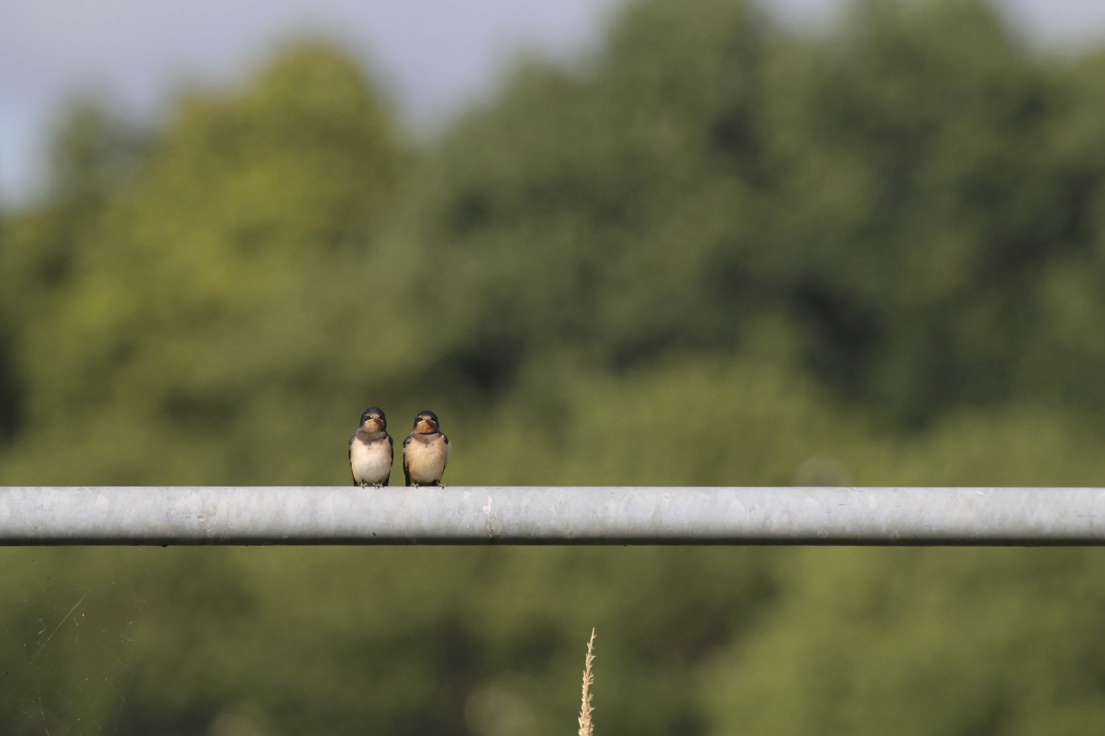 Jut en jul op een hekje